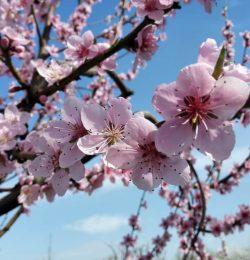 L'arrivo della Primavera: Giovedi 21 Marzo conferenza gratuita