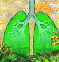 Il polmone come strumento evolutivo